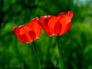 spring-739215_640_R